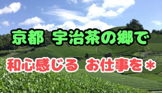 京都で宇治茶収穫の短期アルバイト|仕事内容や魅力を紹介します*