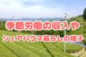 京都の宇治茶収穫バイトで稼ぐ|給料や仕事スケジュールを紹介します〜