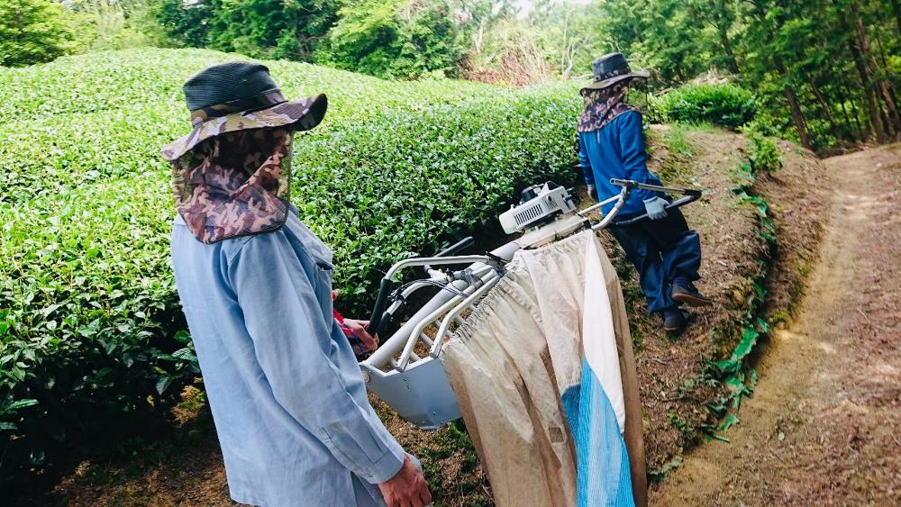 京都和束町・宇治茶収穫アルバイト(季節労働)茶刈機の移動の写真