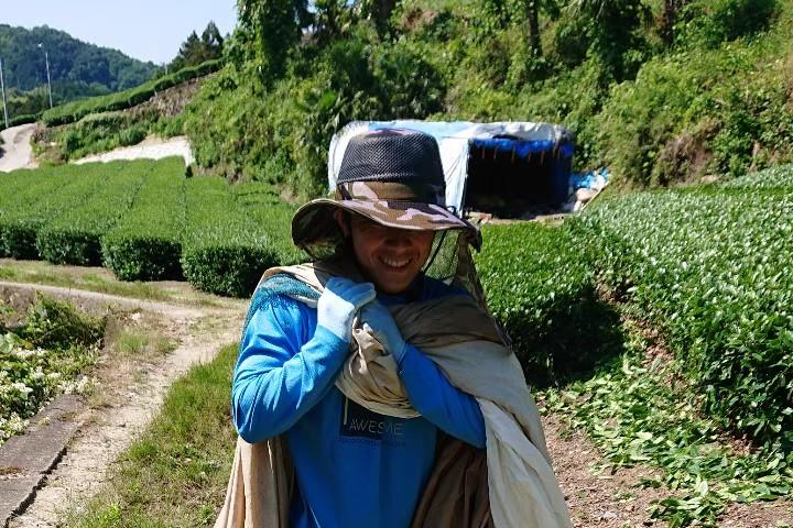 京都和束町・宇治茶収穫、運搬アルバイト(季節労働)の写真