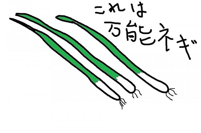 ネギのイラスト