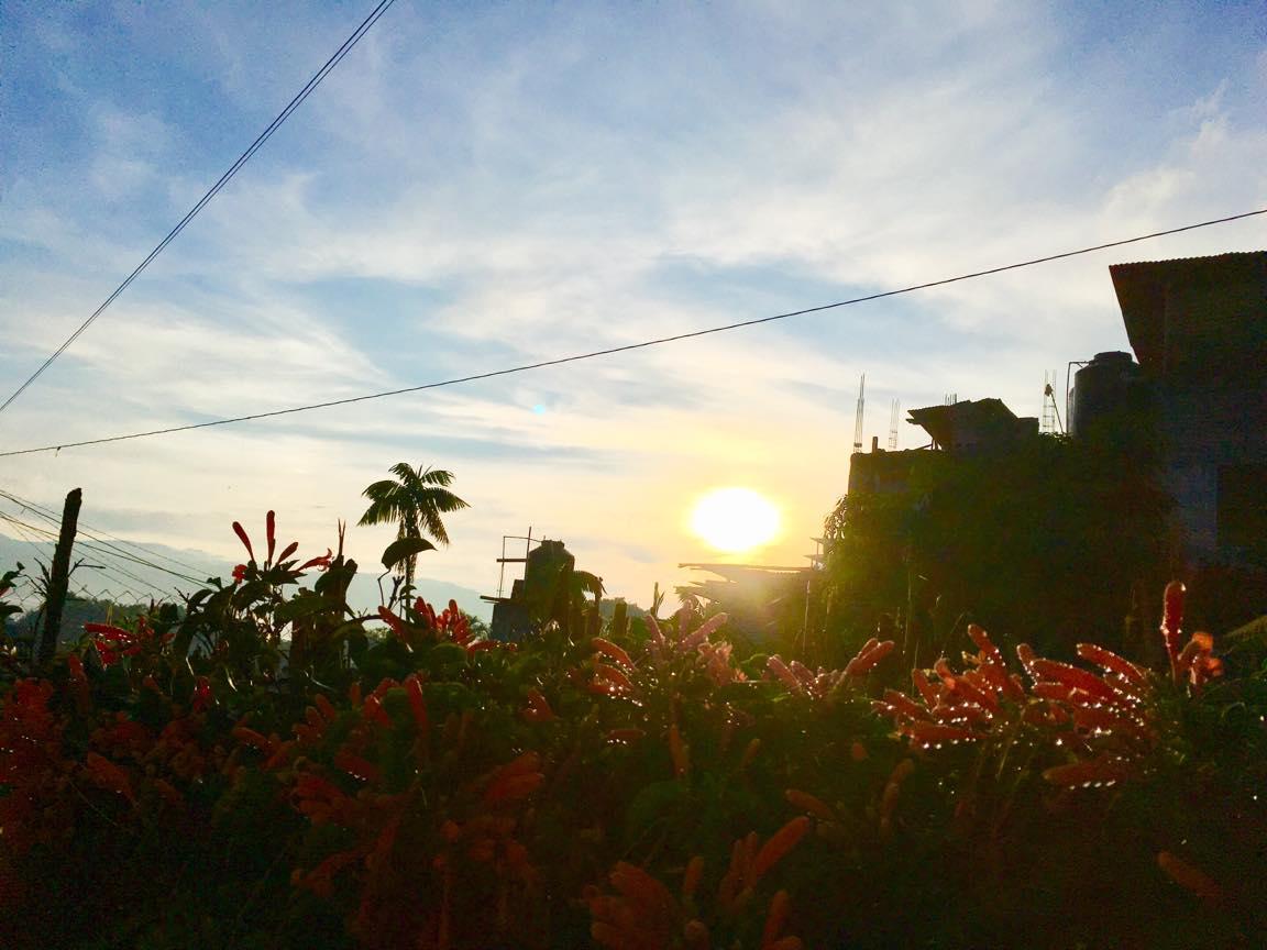 グアテマラ・サンペドロの朝露の写真