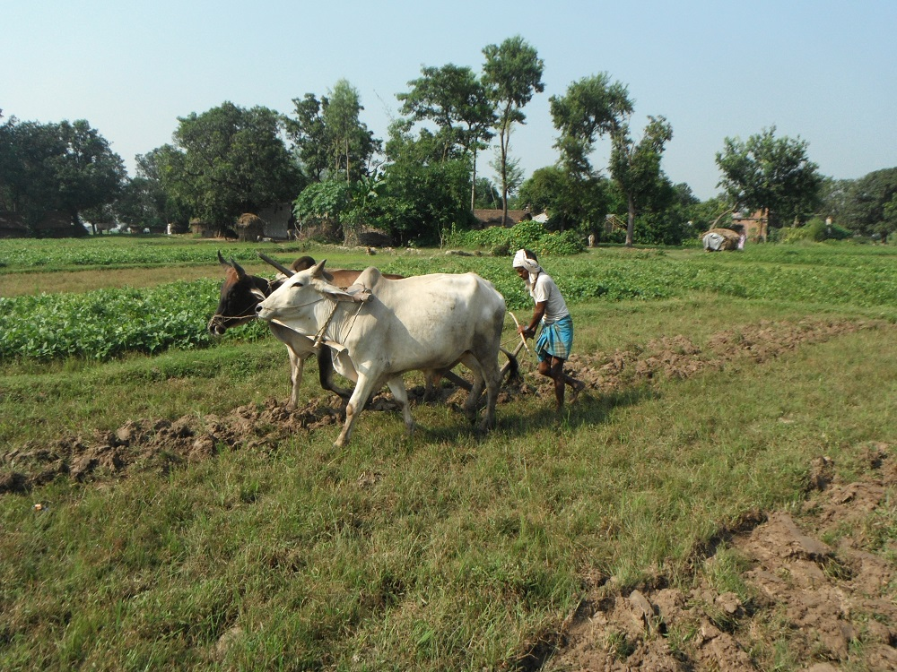 ネパールの畑作の写真