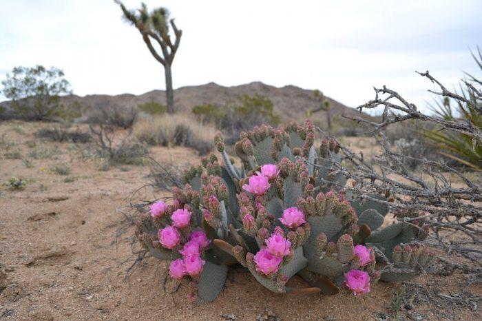 ピンクの花全体の写真
