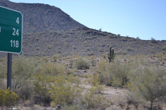 荒野のサボテンの写真