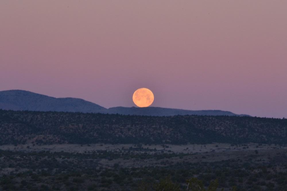 月没の写真