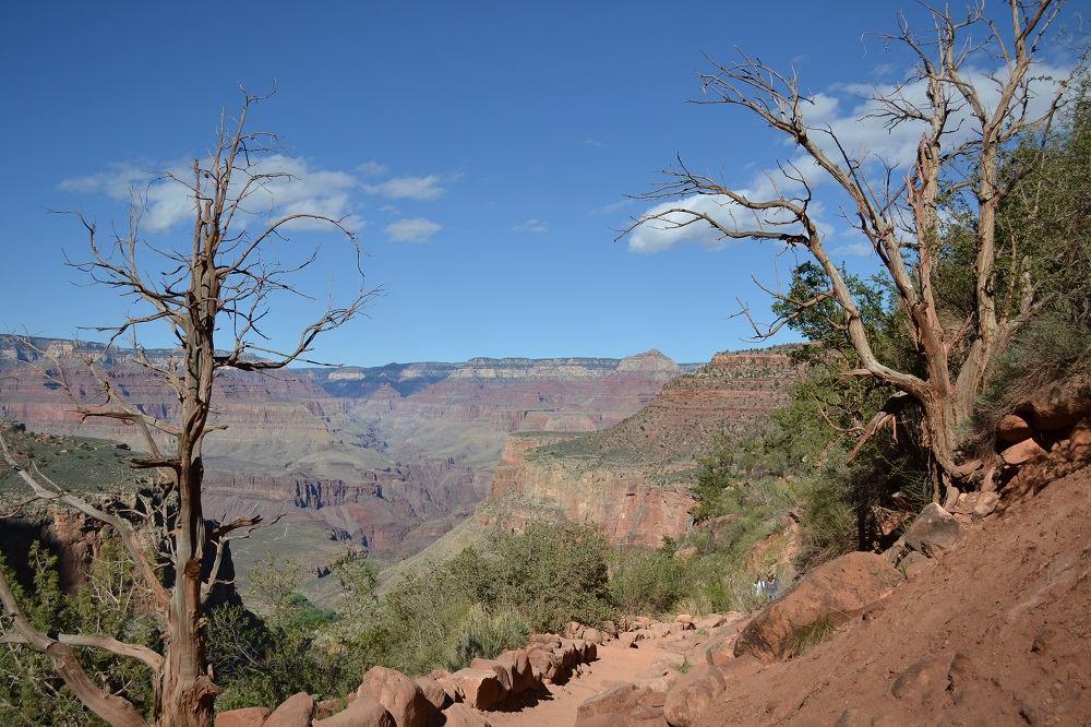 グランドキャニオンと枯れ木の写真