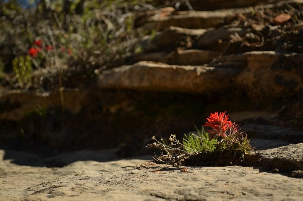 ザイオンに咲く花の写真