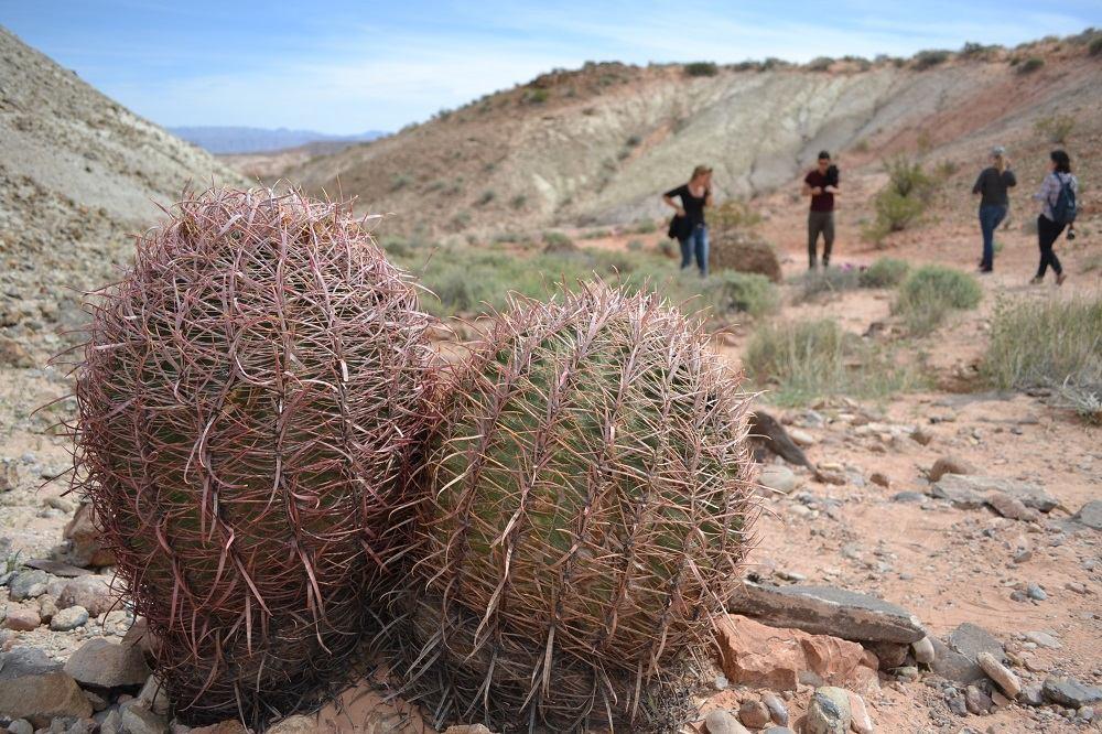 アメリカ観光|砂漠に咲くサボテンの花が想定外の美しさだぞ!