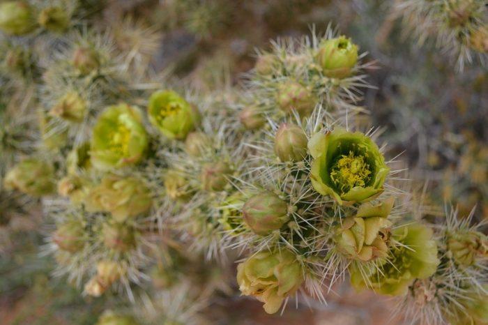 緑の花の写真