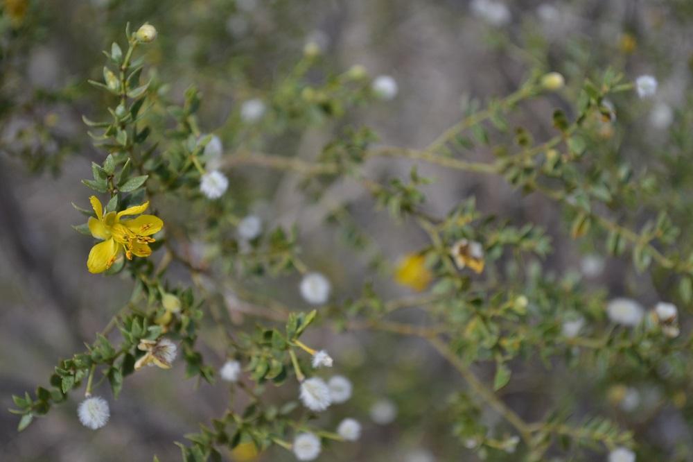 アメリカデスバレーに咲く花の写真