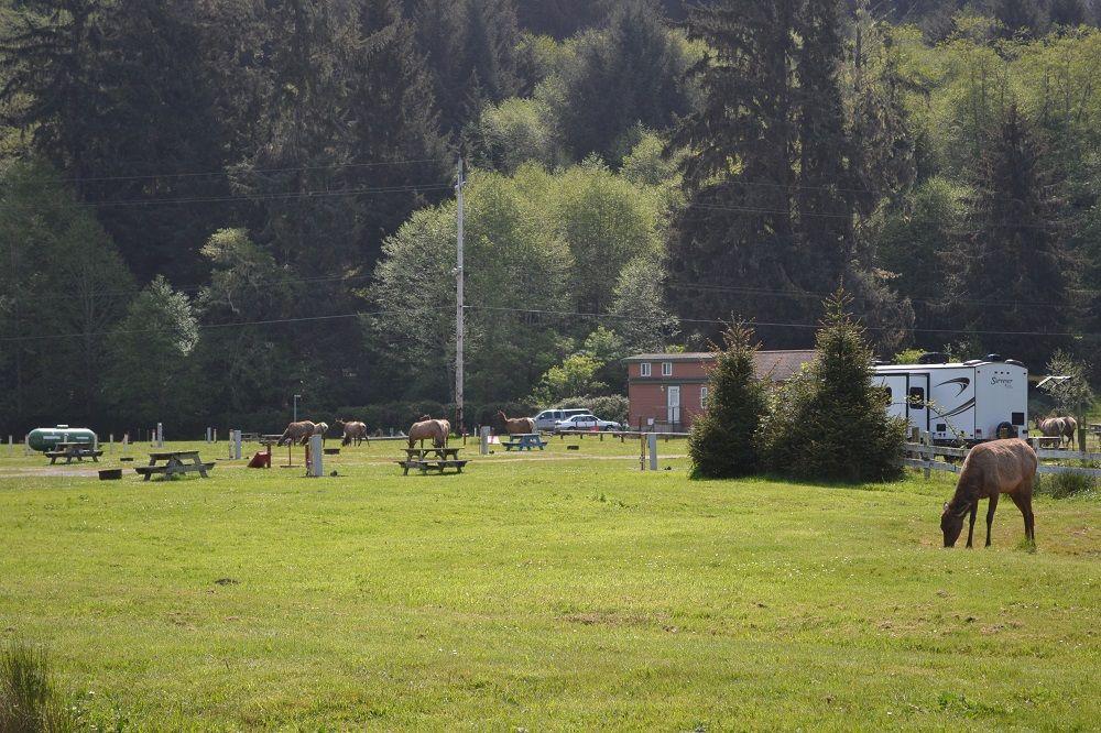 エルクがいるキャンプ場の写真
