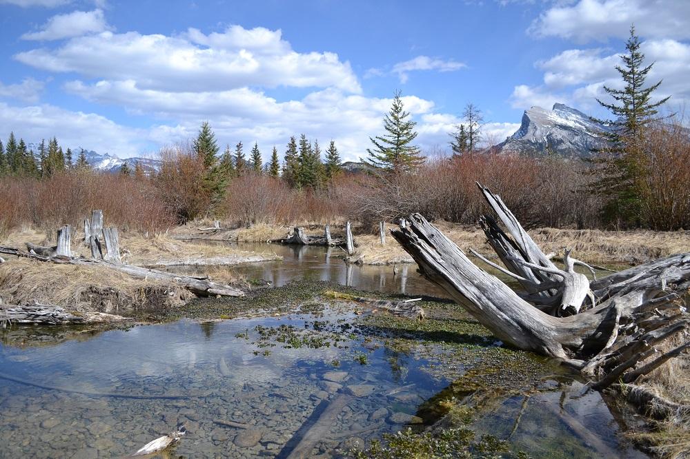 バンフの泉の写真