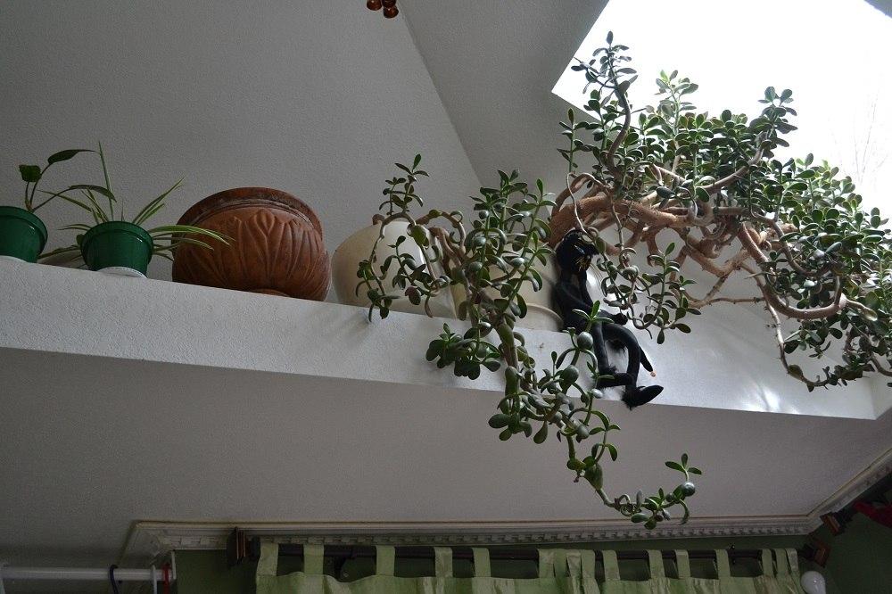 天井に猫のぬいぐるみ