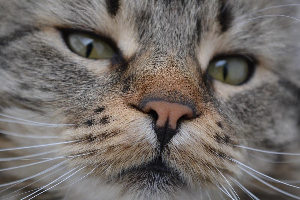 クリスタルさんの猫の写真