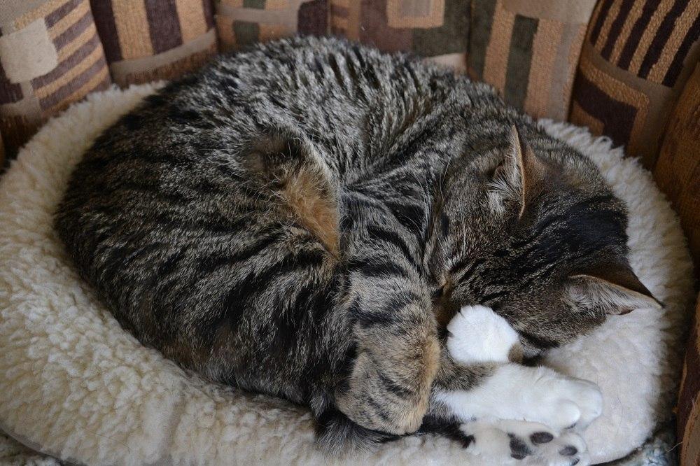 猫ちゃんの写真