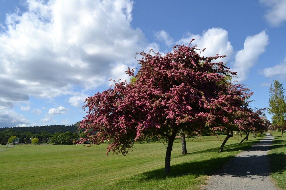 ビクトリアの公園の花の写真