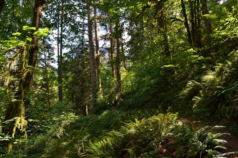 Goldstream Provincial Parkのハイキングコースの写真