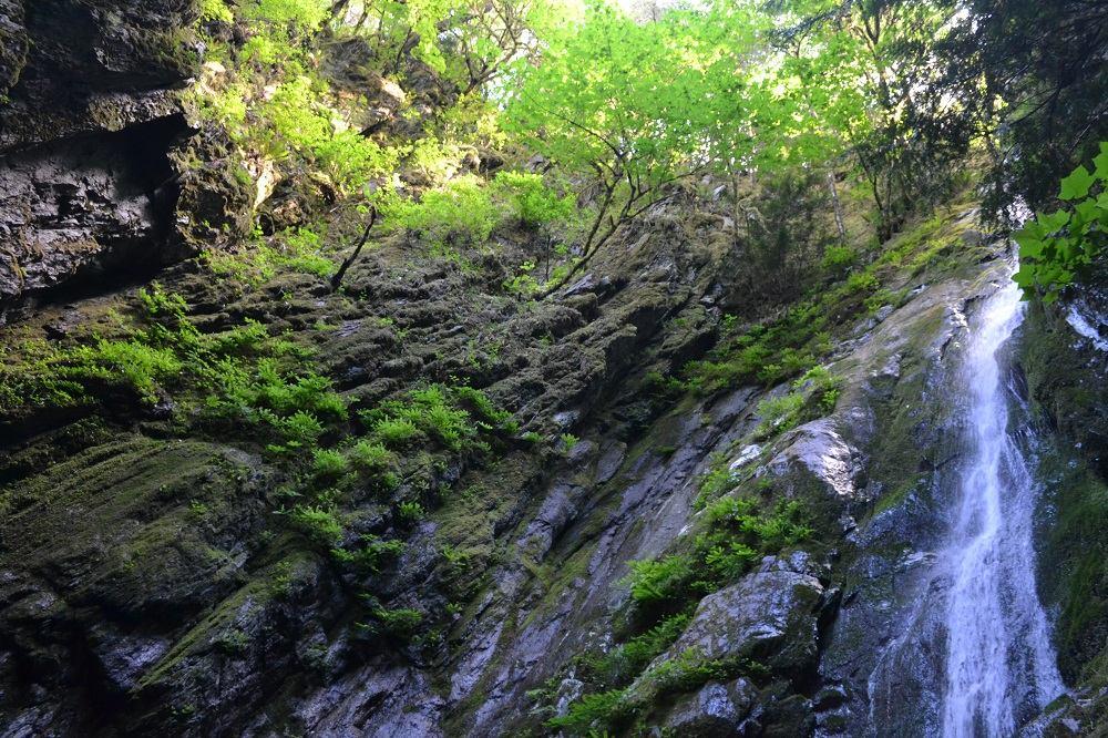 Goldstream Provincial ParkのNiagara Falls滝つぼからの写真