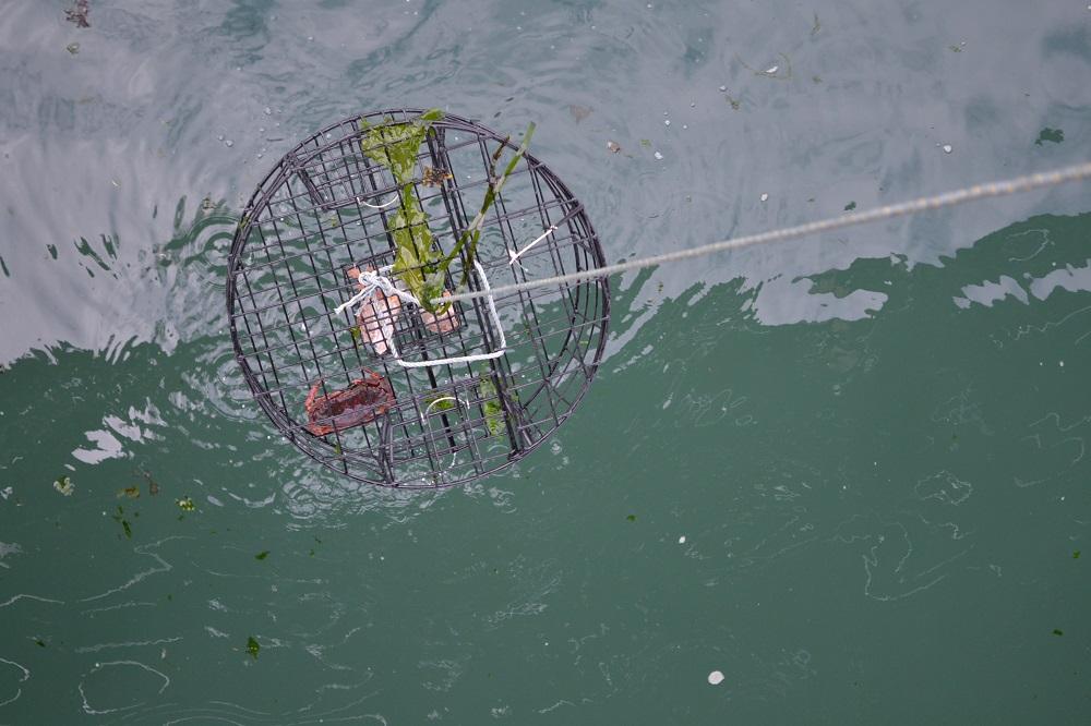 カナダのシドニーで蟹漁に挑戦、捕獲の写真