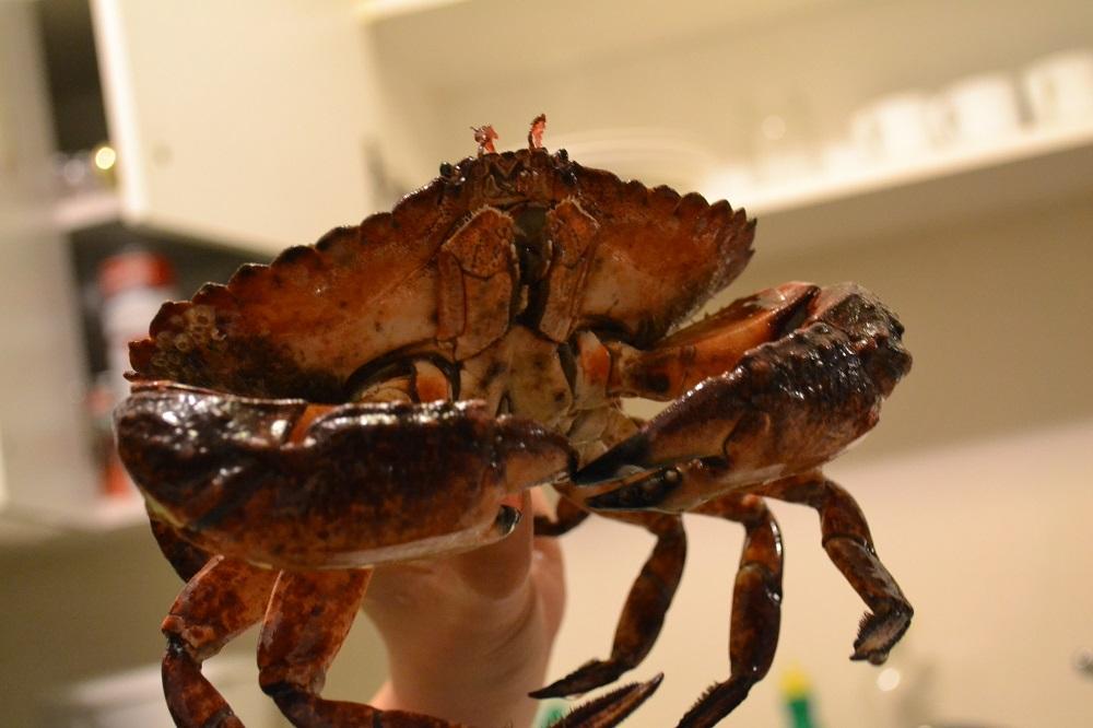 カナダのシドニーの蟹の写真
