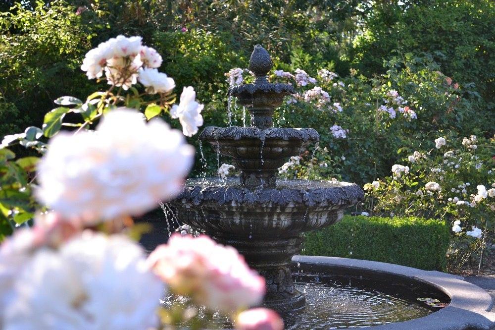 goverment houseのバラの写真