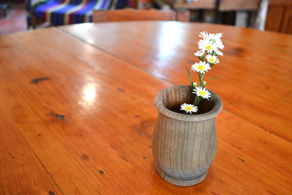 サンクリストバルの日本人宿カサカサのお花(一輪)の写真