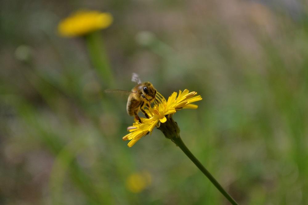 かわいいミツバチの写真