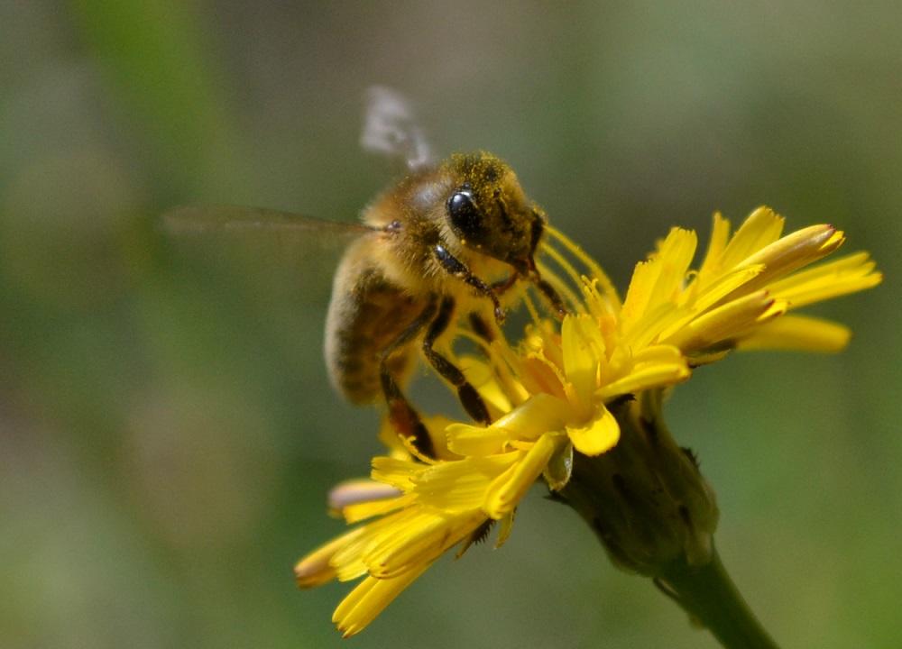 かわいいミツバチズームの写真