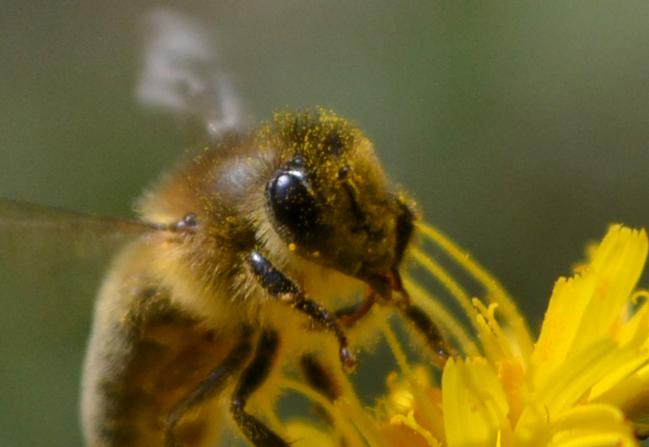 かわいいミツバチの顔の写真