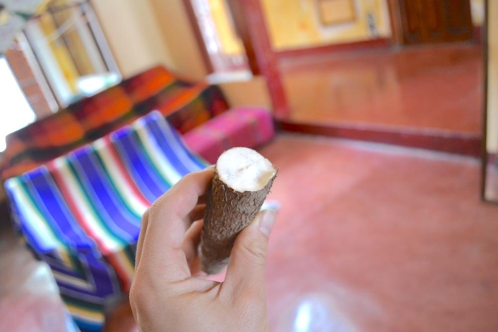 メキシコの根菜ユカ(断面)の写真