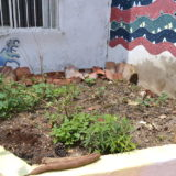 メキシコ・サンクリストバル|カサカサ(中庭の花壇)の写真