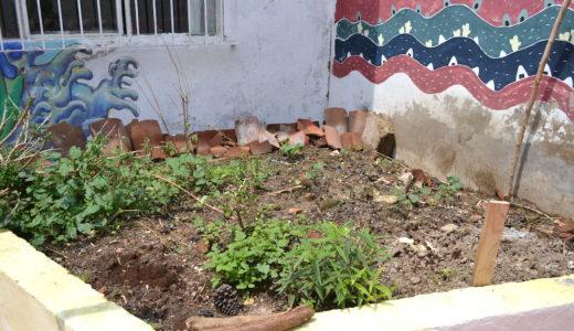 花壇にユカちゃんを植えました〜 果たしてどうなる!?