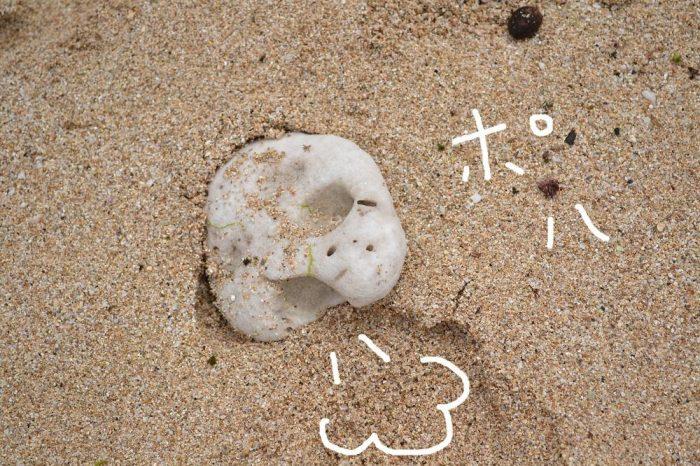 マウイ島のウミガメみたいな石の写真