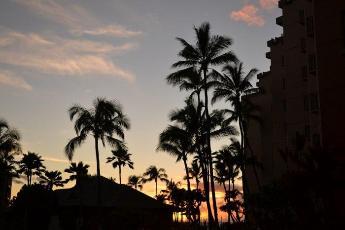 ハワイのヤシの木の写真
