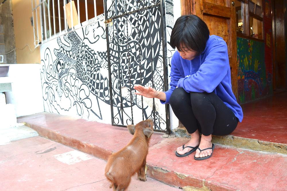 ペッパ(飼いブタ)と河野ルルちゃんの写真