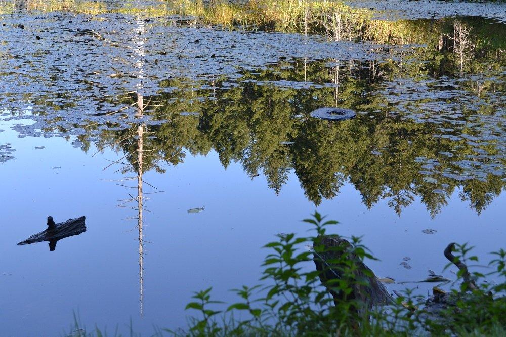 ビクトリアの池の写真