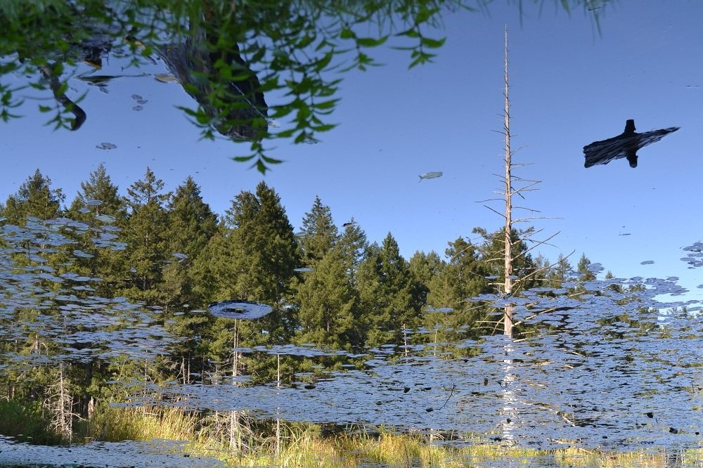 ビクトリアの池(反転)の写真