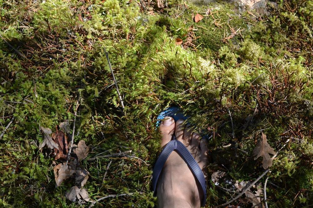 ビクトリアの苔の写真