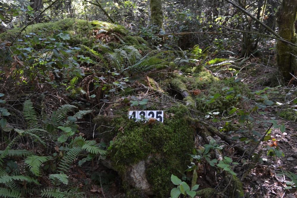 ビクトリアの森の中の表札の写真