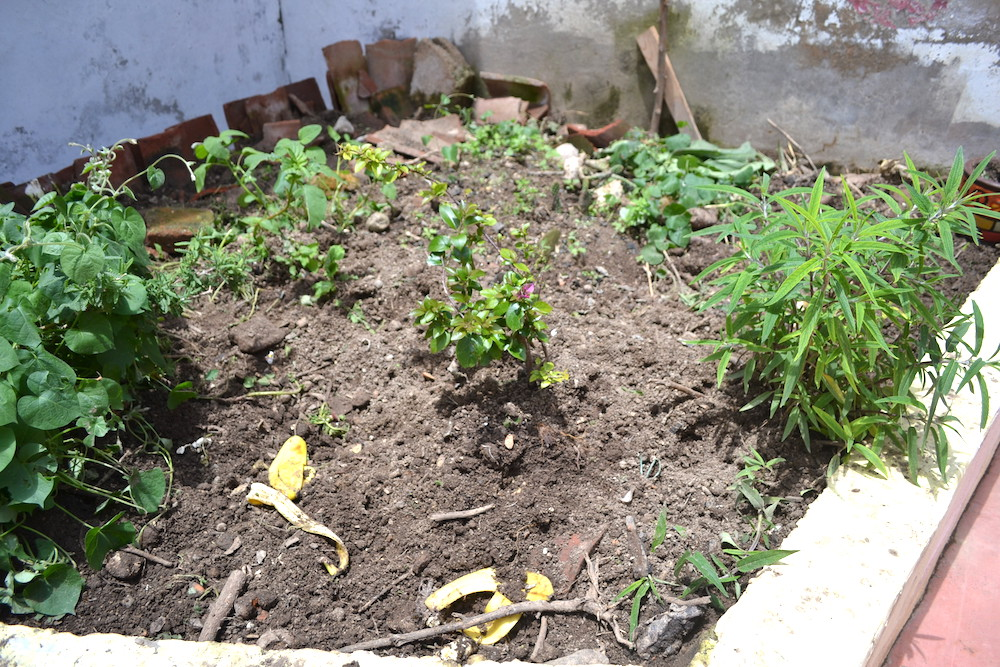 ペッパ(飼いブタ)が掘り返した花壇の写真
