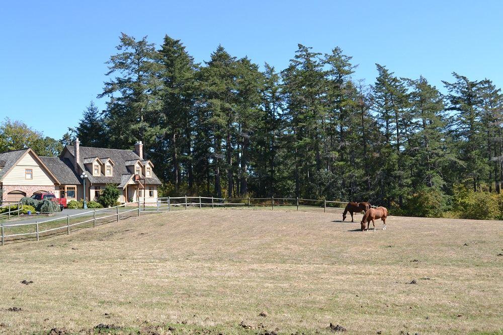 ビクトリアの牧場の馬の写真
