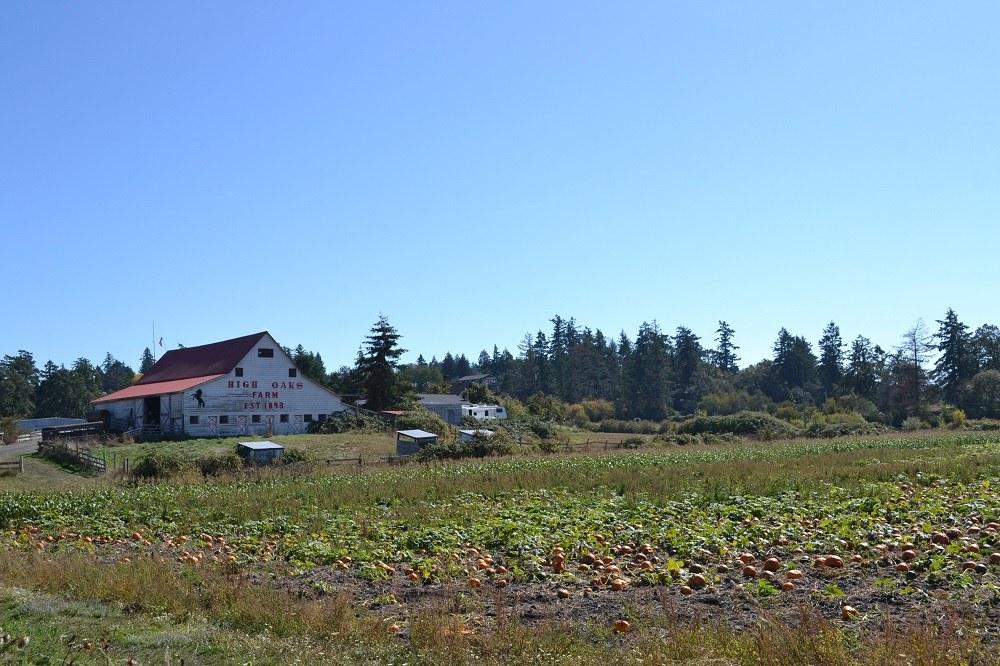 ビクトリアのカボチャ農園の写真