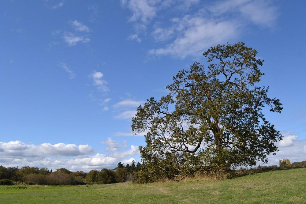 ビクトリアの田舎な風景の写真