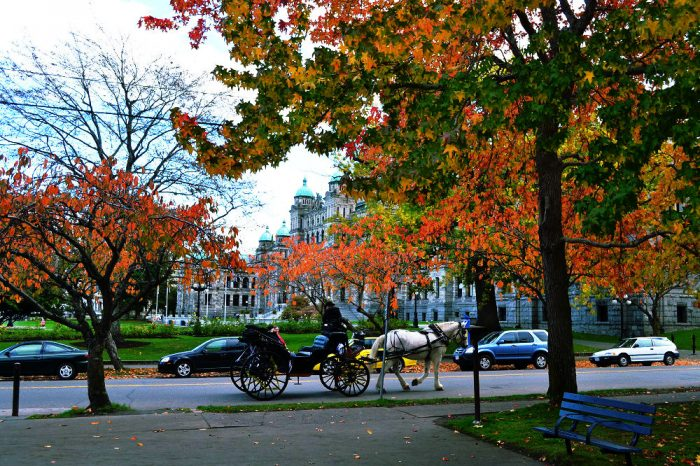 カナダ、ビクトリアの秋の写真