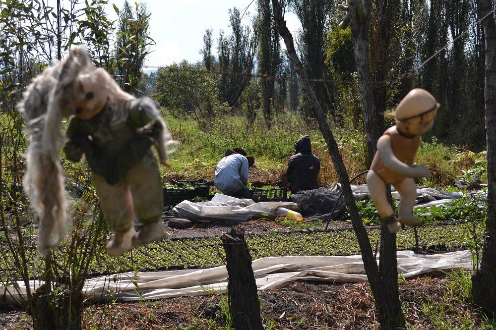 ソチミルコ人形島の横で畑作の写真