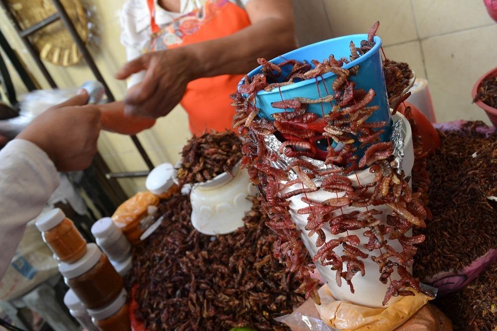オアハカの食用虫市場の写真