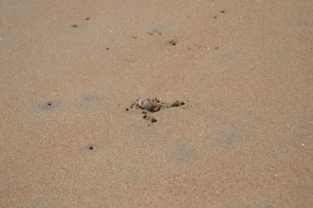 メキシコ・シポリテの蟹の写真