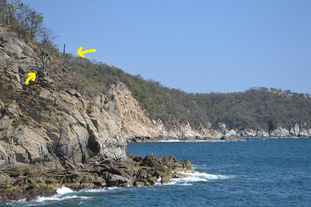 メキシコ・ウアトゥルコの海とサボテンの写真