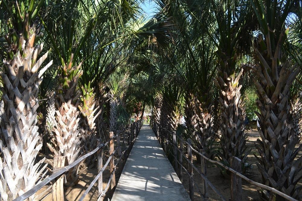 メキシコ・シポリテの福祉施設(アブラヤシ畑)の写真